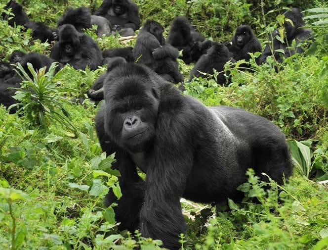 Ruanda'da Goril Safarisi Turu