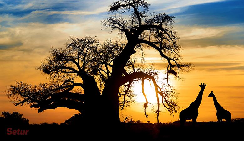 Güney Afrika Turu (Cape Town-Sun City-Pilanesberg-Johannesburg)