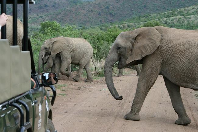 Güney Afrika ve Viktorya Şelaleleri Turu (Güney Afrika-Zimbabwe-Zambia-Botswana)