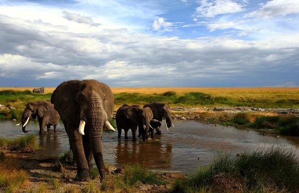 Kenya & Zanzibar Turu SE (Nairobi-Massai Mara-Zanzibar)