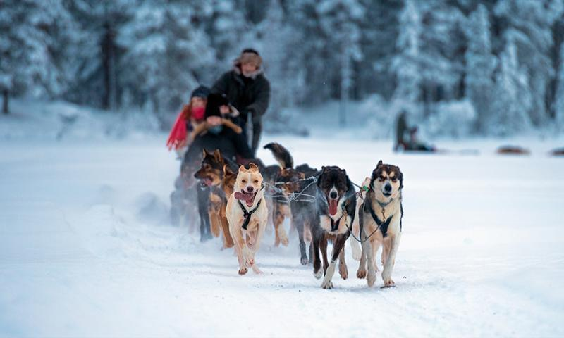 İsveç & Norveç & Tromso Kuzey Işıkları Turu