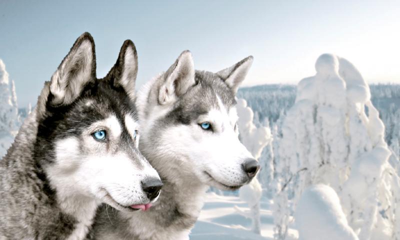 Laponya Turu THY İle 3 Gece (Setur Select - Burak Özberk Eşliğinde)