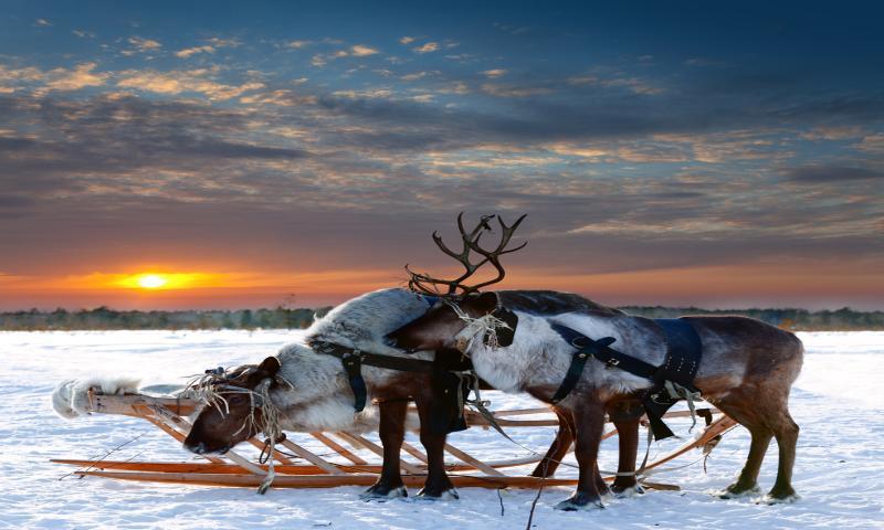 Kral Yengeç'li Laponya Turu THY İle 4 Gece (Setur Select - Burak Özberk Eşliğinde)