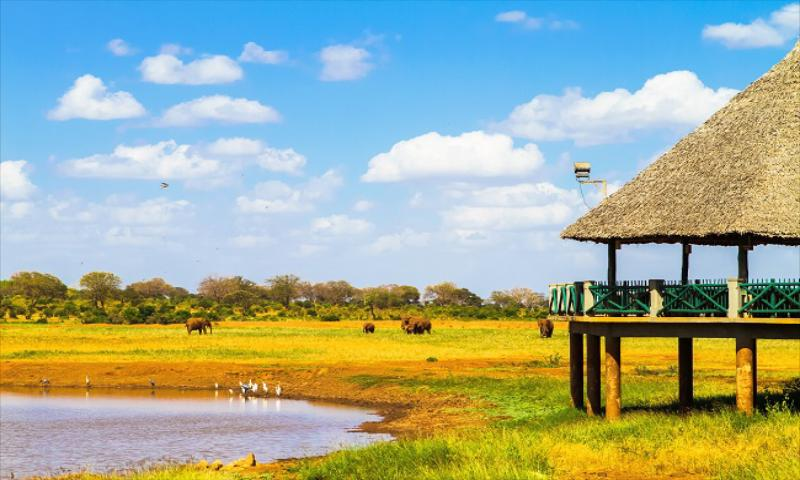 Safari'den Okyanusa Kenya Turu (Tsavo Ulusal Parkı & Diani Beach)