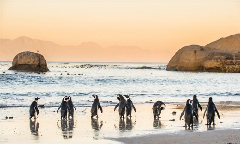 Güney Afrika Turu (Cape Town & Kruger Milli Parkı & Johannesburg)
