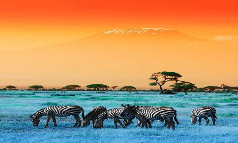 Tanzanya'nın Heyecan Doruğu Kilimanjaro Dağı'na Tırmanış