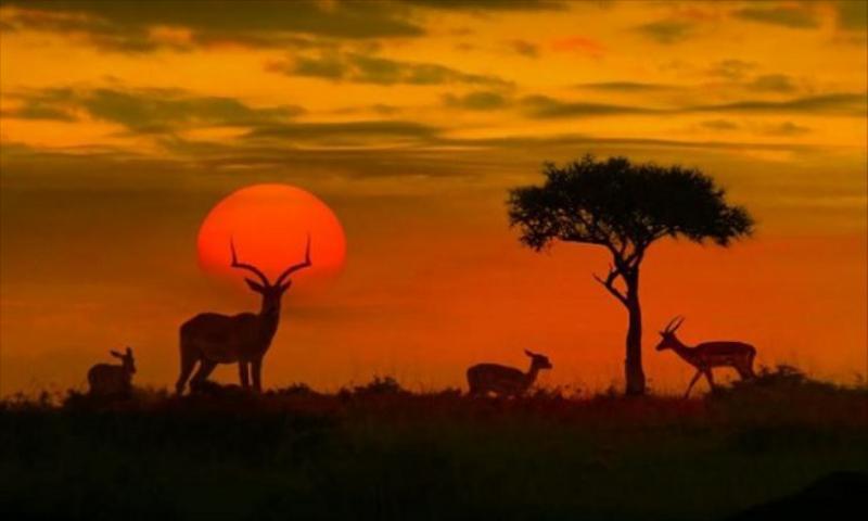 Güney Afrika & Kruger Park & Victoria Şelaleleri & Botswana Turu