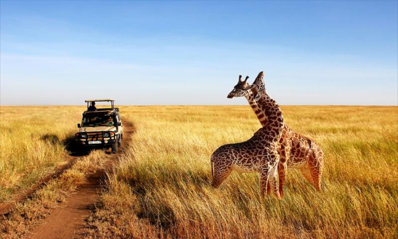 Sedventure ile Tanzanya'da Safari ve Zanzibar Turu